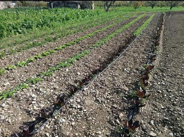 Azienda Agricola di Barletta Giuseppe